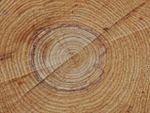 Coupe de bois, cernes de croissance et âge d'un arbre
