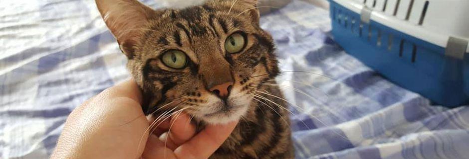 Urgence famille d'accueil pour chats adultes