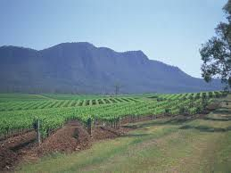 Viticulture in Australia