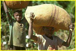 Côte d'Ivoire : des producteurs de la filière cacao s'engagent contre le travail des enfants