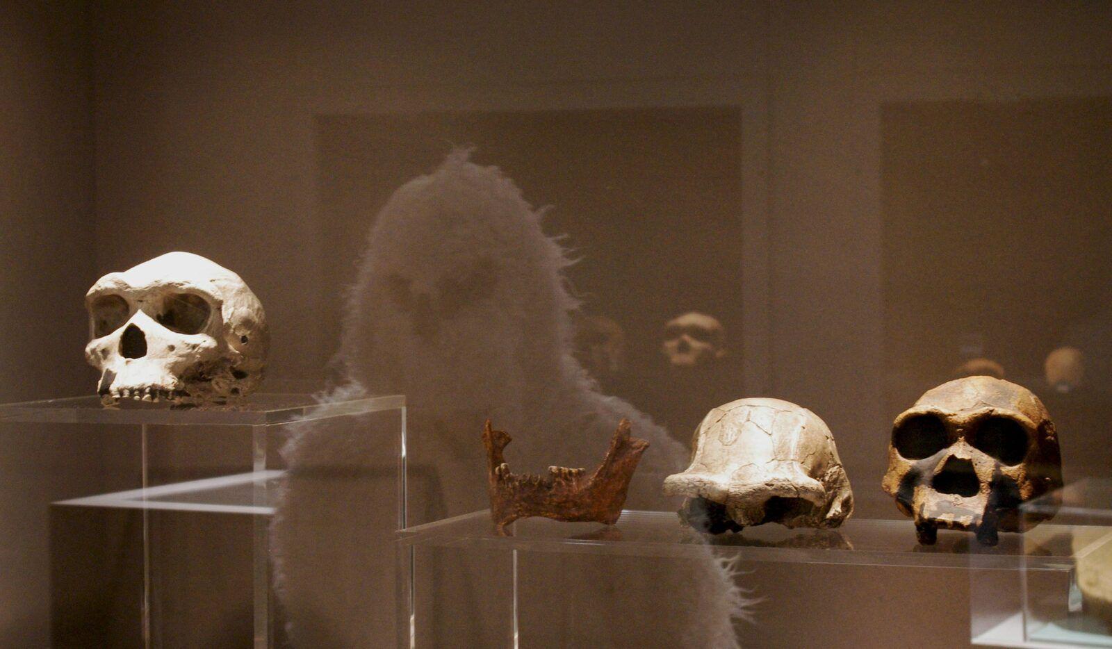 Le Yéti découvre la préhistoire