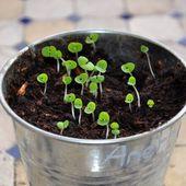 TUTO : Faire des godets ou des pots à semis en papier journal - En direct de la fabrique de crevettes