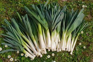 23 Mars, première récolte de l'année : 4800g de poireaux