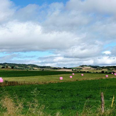 Balles de foin de couleurs en Haute-Loire
