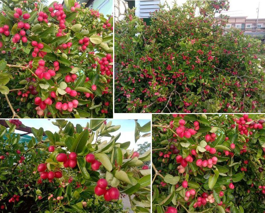 Le Karonda - Fruit de saison (21-09)