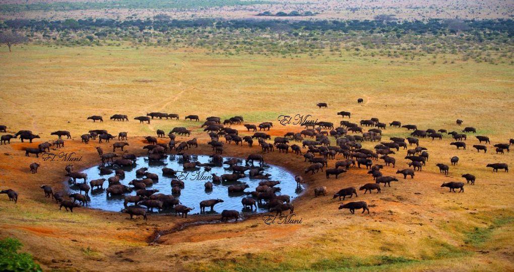 Imágenes de Sudáfrica, por gentileza de Sibongile Sambo.- El Muni.