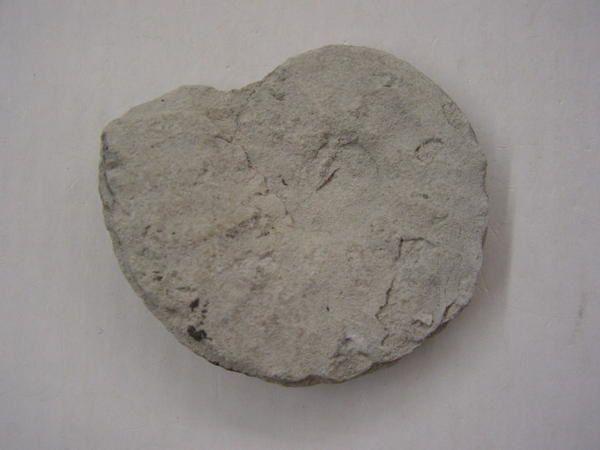 """<p></p> <p>Voici l'album des éclopés, des amochés, de ce qui reste quand les amateurs n'ont pas été assez rapides pour sauvegarder les fossiles menacés !</p> <p>Certaines photos montrent un panachage entre les fossiles parfaits sauvés juste à temps, et le fossile usé devenu un quasi-galet.</p> <p>FOSSILE RAMASSE = FOSSILE SAUVEGARDE</p> <p>Phil """"Fossil""""</p>"""