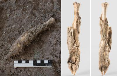 Iran : L'ADN d'un mouton momifié vieux de 1 600 ans fait revivre l'histoire !