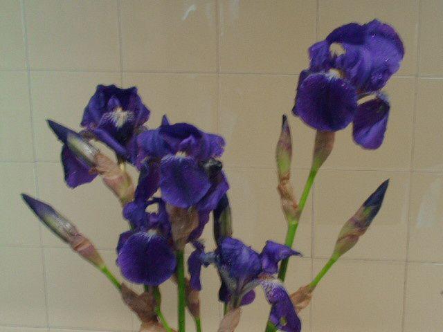 Album - Fleurs et jardin