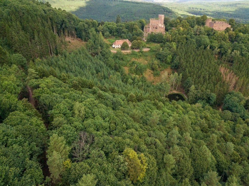 La forêt devant les Châteaux d'Ottrott