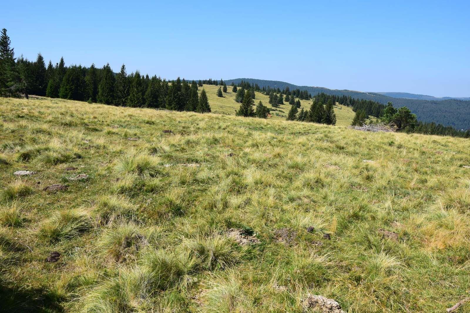 Les chaumes du Hilsenfirst et Langenfeldkopf