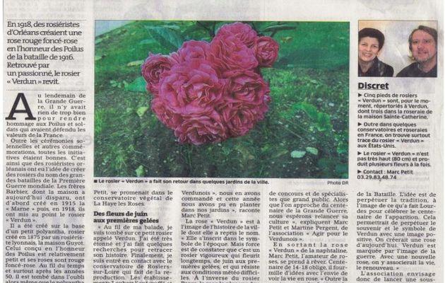 """La renaissance du rosier """"VERDUN"""""""