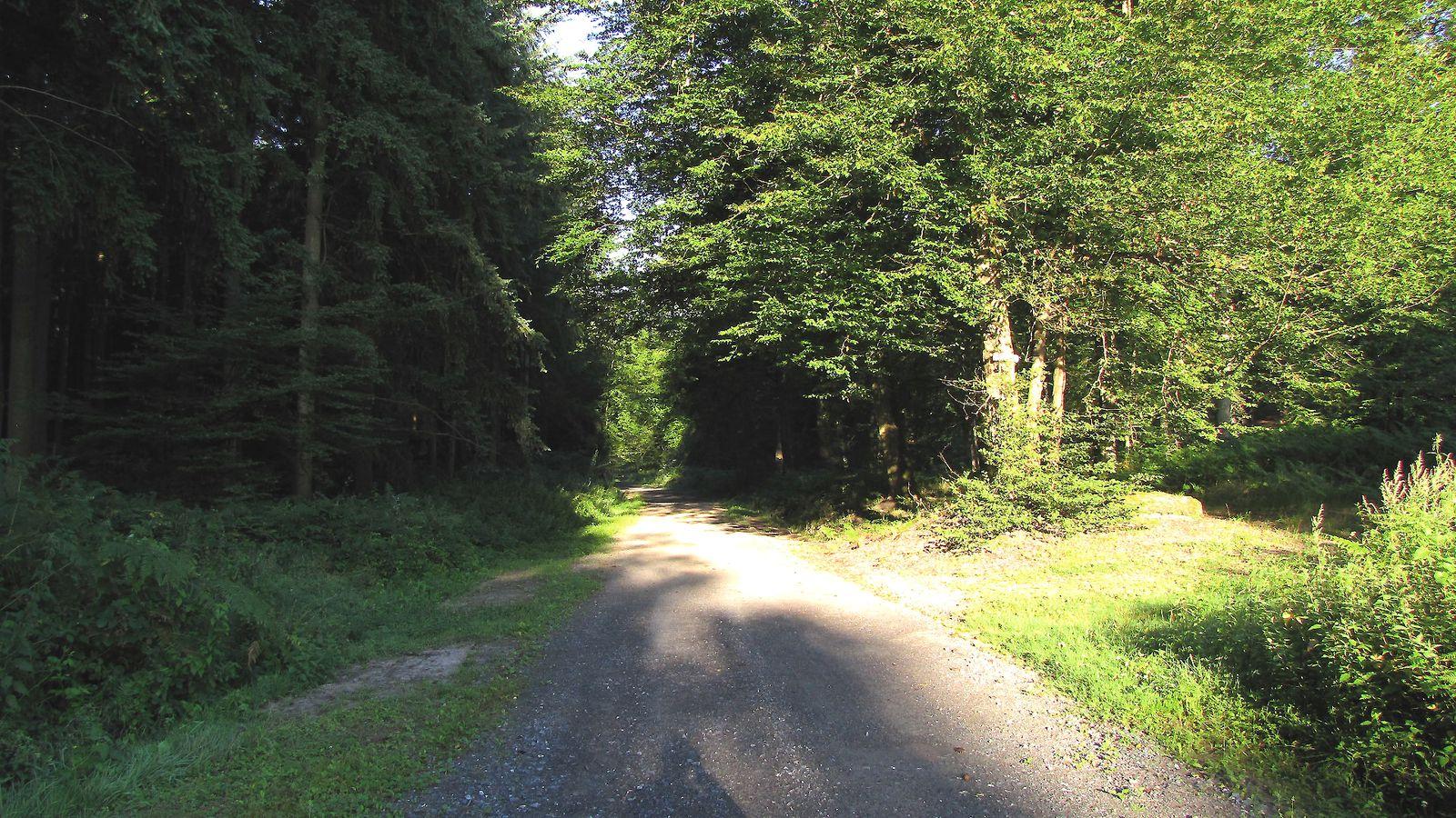 le Chemin de Longpont en forêt de Retz