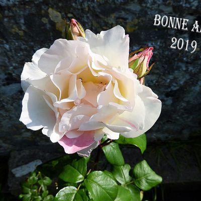 VOEUX POUR LA NOUVELLE ANNEE 2019