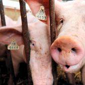 Agriculture : pourquoi l'élevage français est-il en crise ?