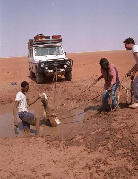 Nord-Niger.année 2000 Sauvetage de 4 chameaux par E.O.T. Merci au Mercedes 300GD