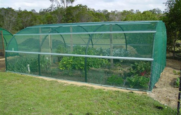 Adopting Greenhouse Technology can Boost Agricultural Growth