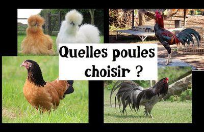 Quelles poules choisir ?