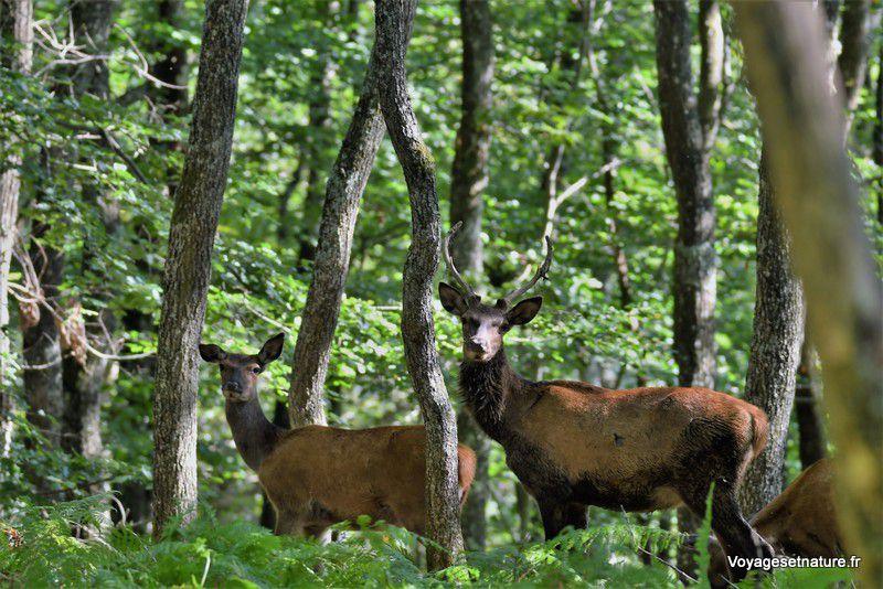 Le parc naturel de Chambaran (38)
