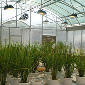 Benefits of Choosing Greenhouse Supplier in India