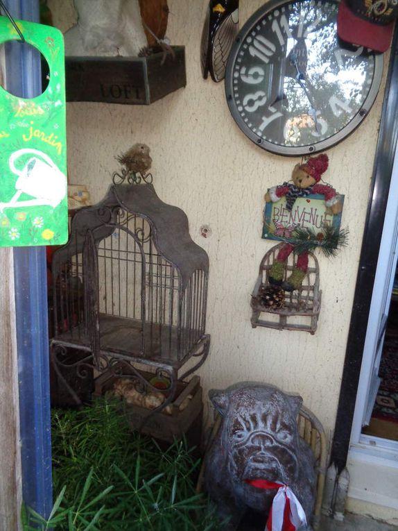 """Petit diaporama de mon jardin ,avec mon chat """"Déluge """" à mes côtés ,photos prises ce matin ....."""