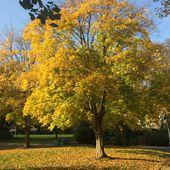 La Nature en ville - Espaces verts et espaces de respiration