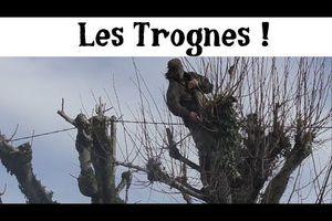Les Trognes