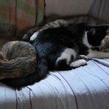 Des chats... et des canapés!