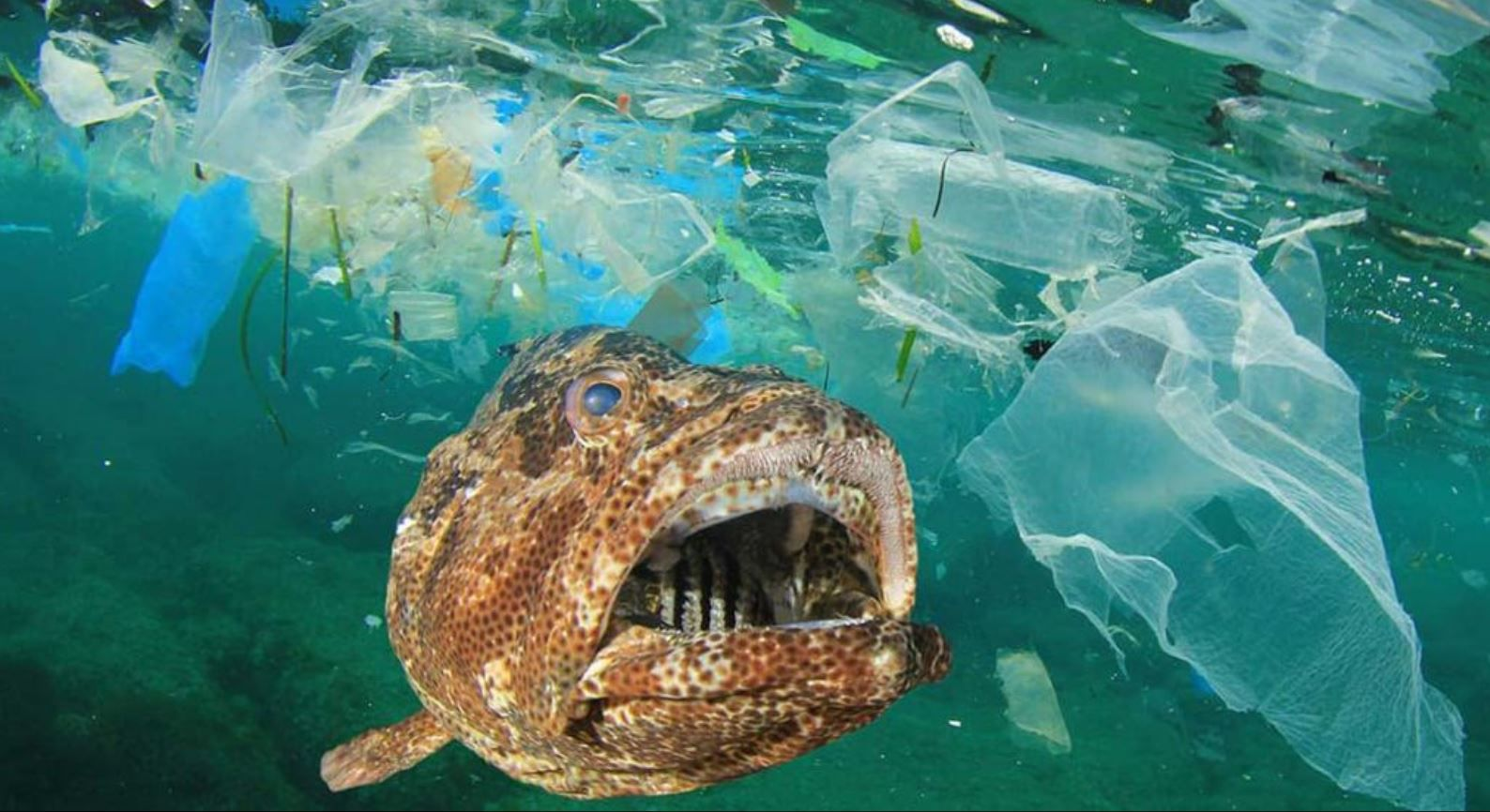 The seabed littered with microplastics, according to a new study