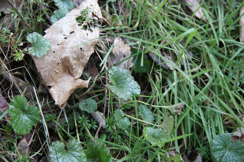 Album - C--Animations-plantes-comestibles---printemps-2012
