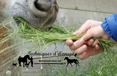 La question du temps équin ou comment parler du futur à un cheval