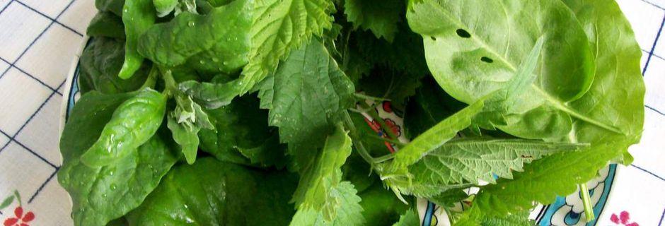 Spinat, Sauerampfer und Brennessel