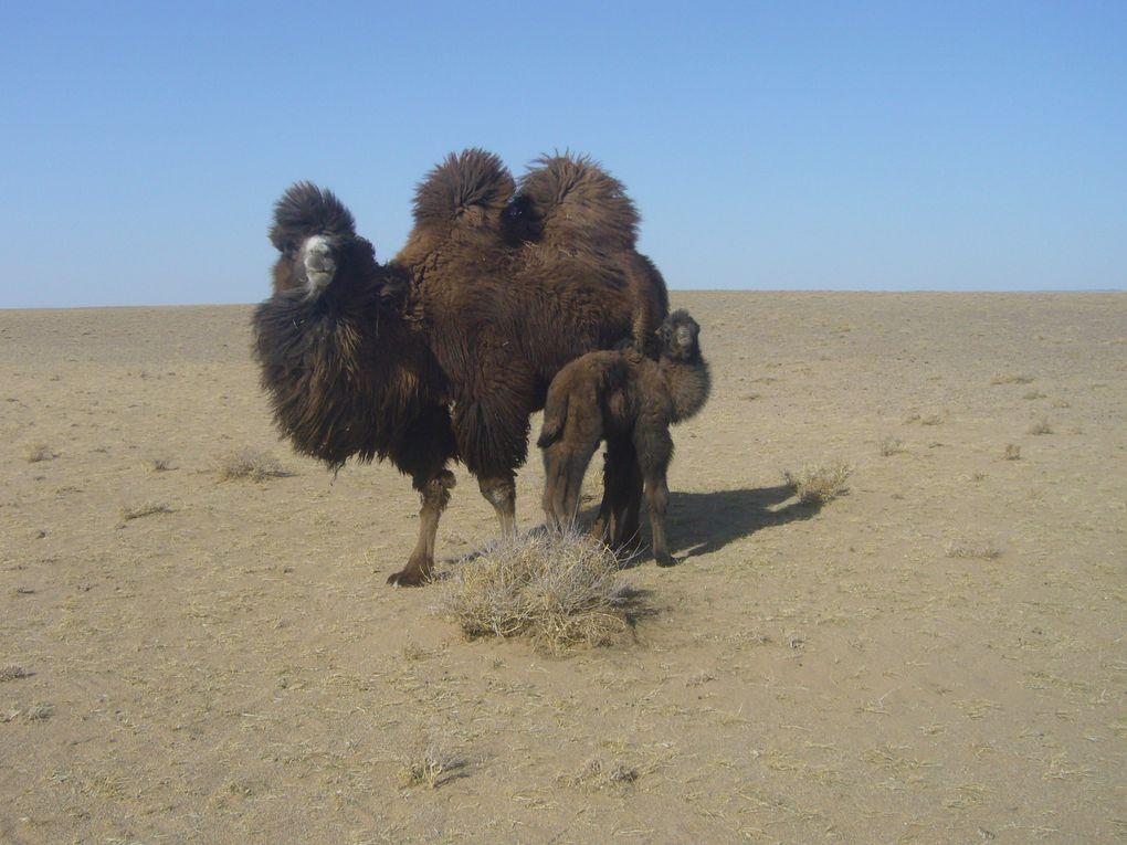 Album - 10 : Mongolie