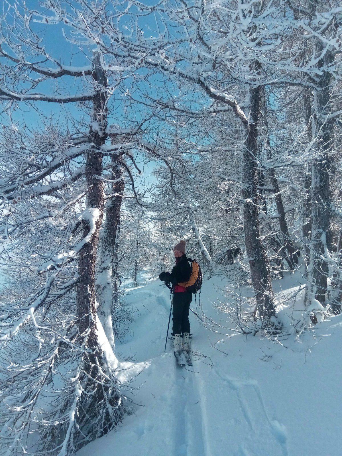 Le lendemain d'une chute de neige, la forêt est féérique