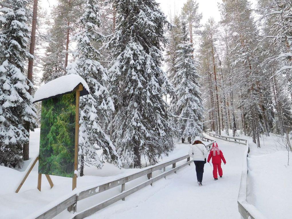 Zoo artico di Ranua - Lapponia (Finlandia)