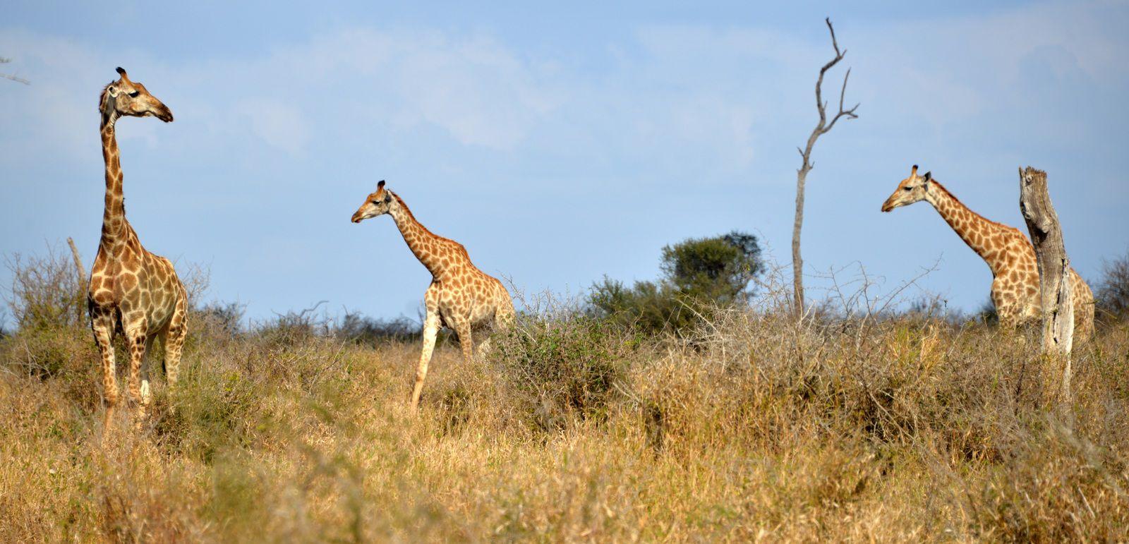 Afrique du Sud / 5 / Il est 08h16, nous sommes le 14 Novembre