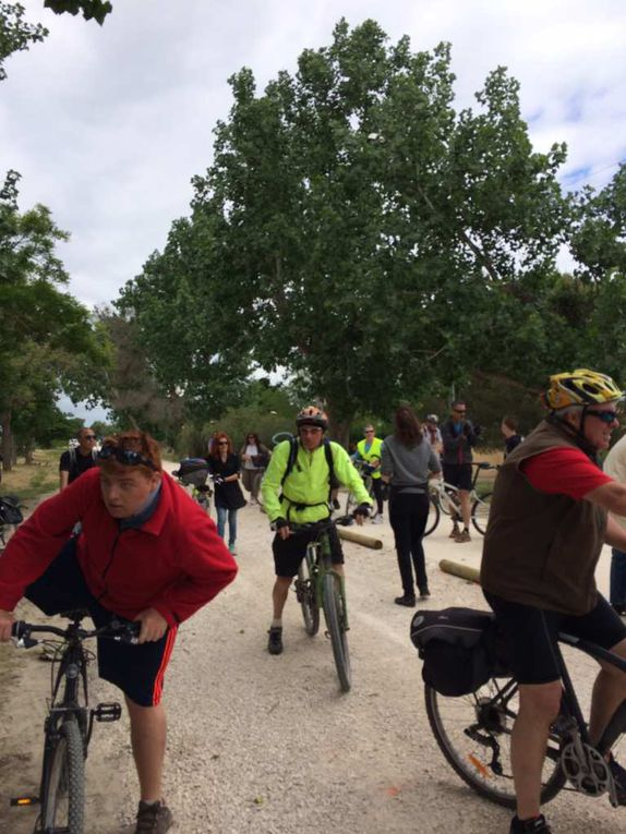 Alain Michel, responsable de l'association AF3V, véritable expert des vélos routes ! Une belle piste en direction du Marais du Vigueirat, joyau de la biodiversité ...