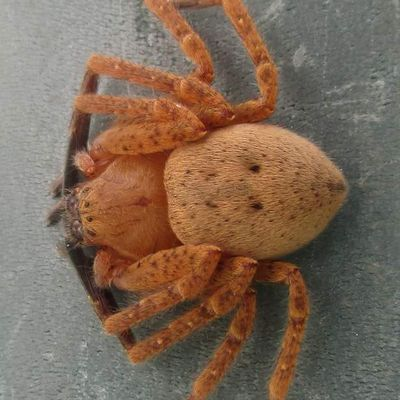 Araignée ?