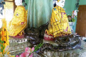 Yangon (12) ... En mototaxi jusqu'au village de Twantay