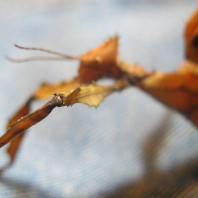 Shooting photo Scorpion