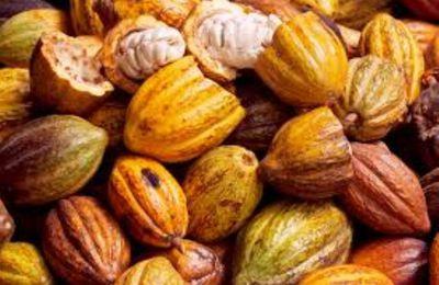 La Côte d'Ivoire et le chocolatier Mars renforcent leur partenariat