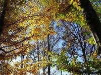 Dans la forêt de Magny-Vernois - 10 photos
