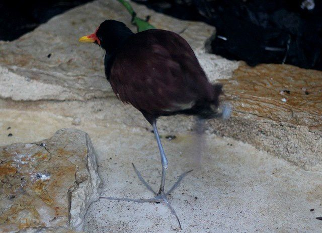 Album - oiseaux echassiers