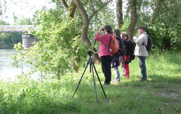 Les oiseaux au rendez-vous de la balade proposée par Asparagus – l'empreinte nature, le 17 mai dernier à Bezons, le long des berges de Seine
