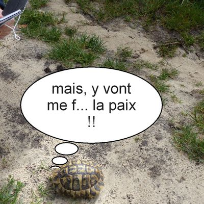 2021/07 : la tortue se la coule ... douce