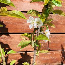 Les fleurs du mois d'avril 2020, dans le micro jardin urbain