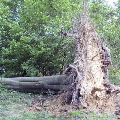 Qu'est ce qu'un broyeur forestier et où en acheter ?