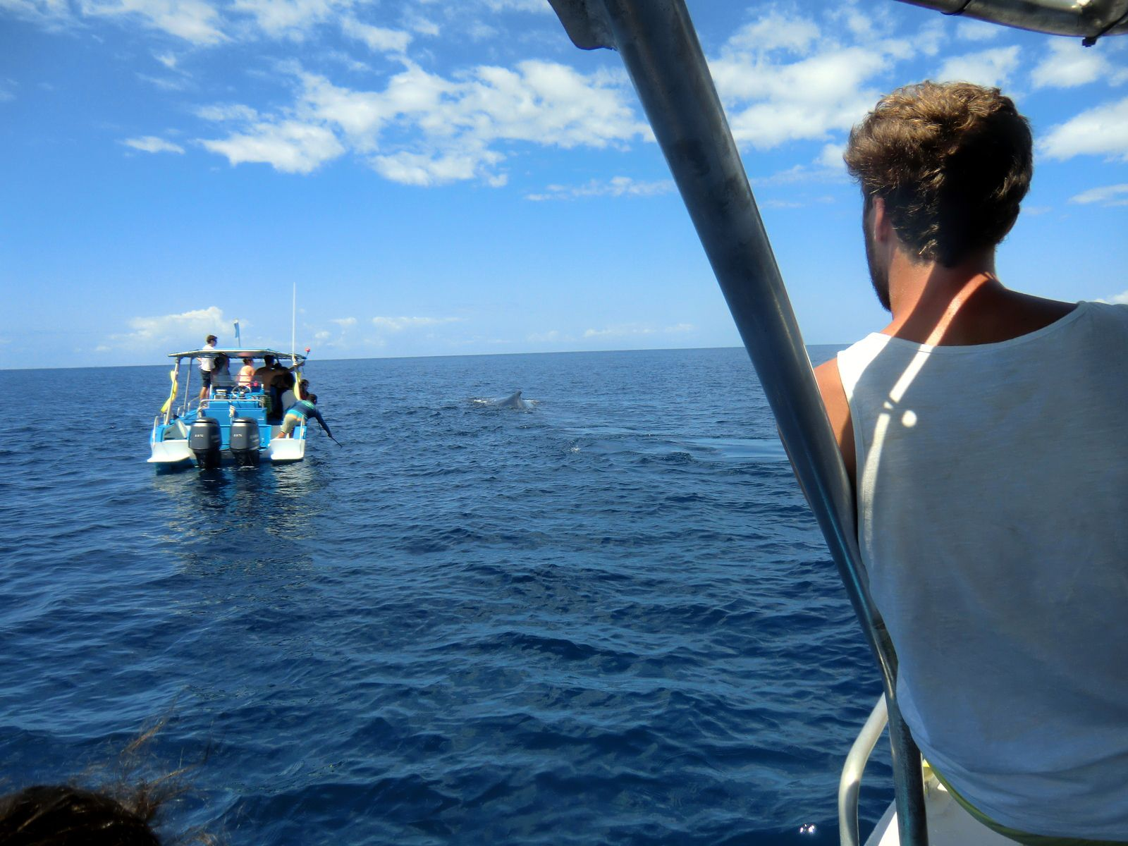 Approche des baleines, exemple de ce qu'il est interdit de faire, photo Joanny