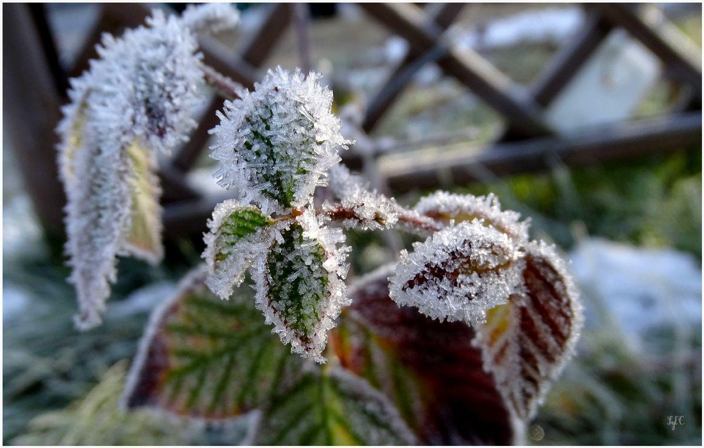 Après une nuit froide - 10 photos