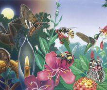 Comment effrayer les gens et leur faire soutenir une mauvaise politique sur les abeilles et autres pollinisateurs